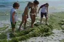 Farsa pe plaja